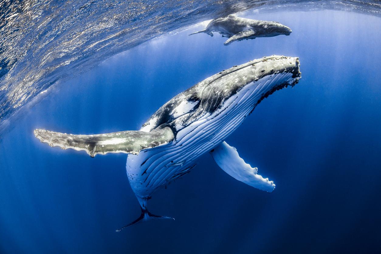 bitcoin bitfinex whales