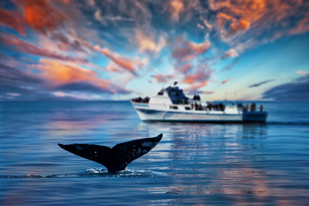 Whale Watching: Bitcoin Long Positions Near All-Time High