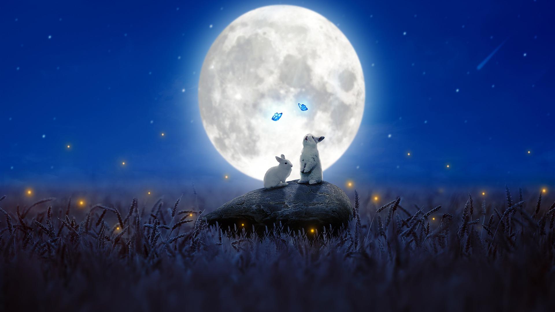 Moon Rabbit: Visualizing Longevity via the Cryptocurrency Ecosystem