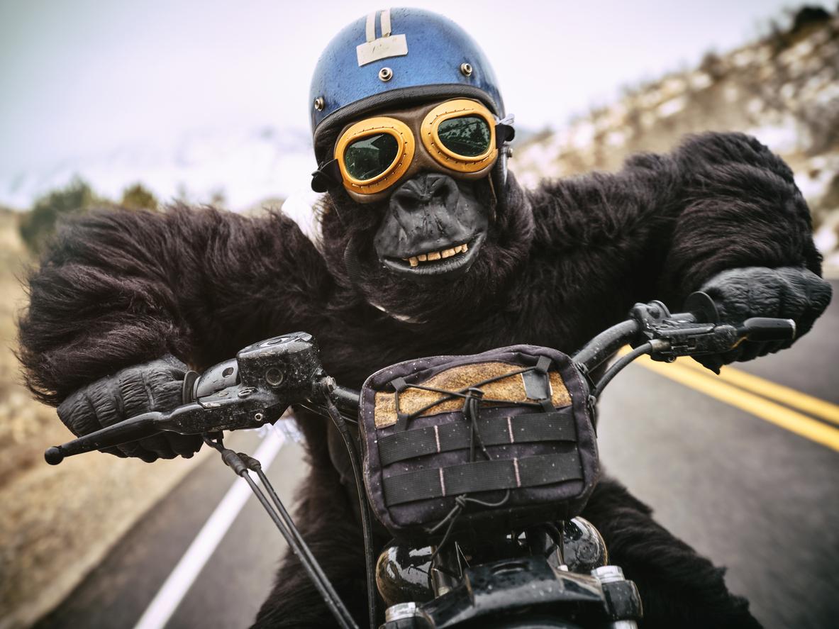 NFT Gorillas Burned $90,000 Worth Of Ethereum Per Minute